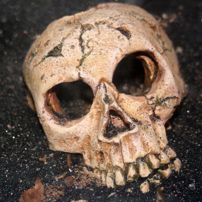 Ludzka czaszka. Sproszkowana służyła jako składnik lekarstwa na podagrę (fot. domena publiczna)