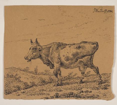 Jednym z bardziej absurdalnych konfliktów była bitwa o krowę
