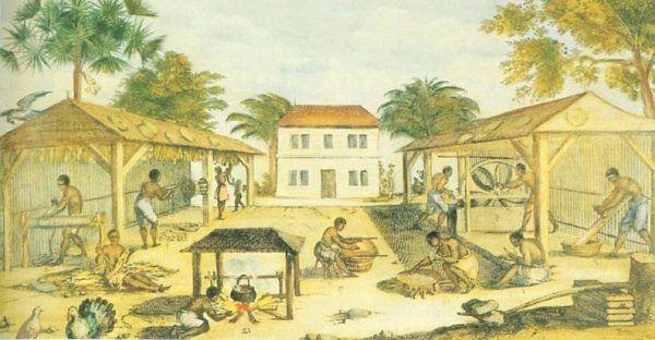 Niewolnicy podczas pracy na plantacji tytoniu
