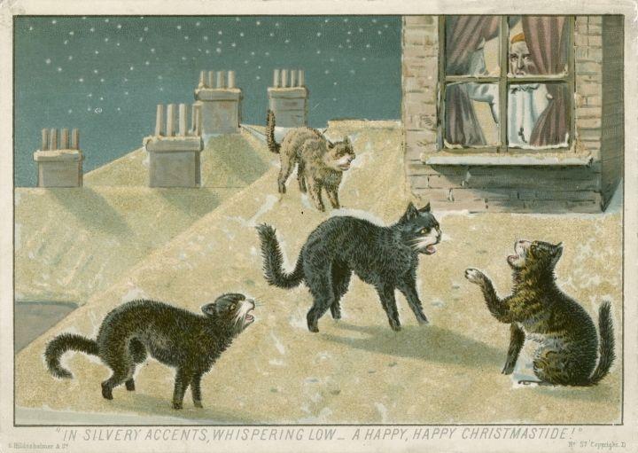 Koty czuły magię Świąt