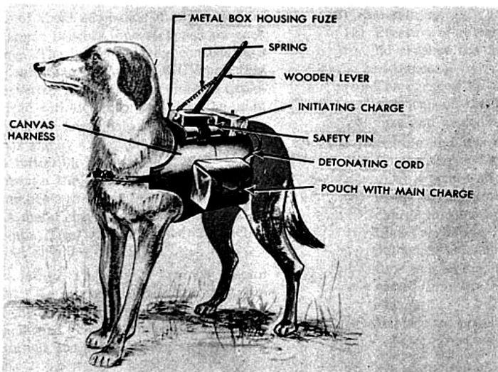 Psy przeciwpancerne