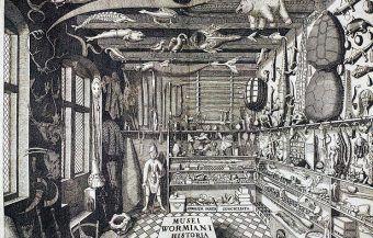 Fronton z Ole Worm w książce Muzeum Wormianum od 1655 roku