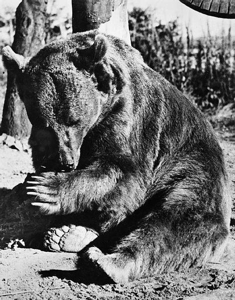 Wojtek po demobilizacji jego oddziału trafił do edynburskiego zoo.