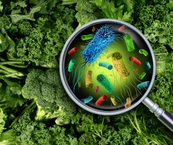 Przed 3,5 miliarda lat pojawiły się bakterie, które do dziś dnia stanowią najliczniejszy rodzaj organizmów na Ziemi.