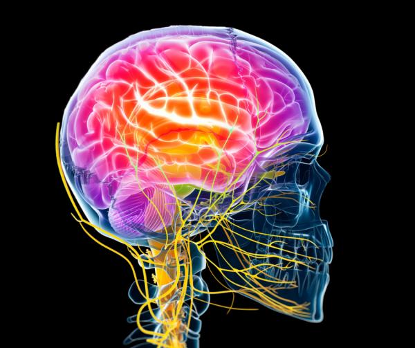 Być może trudno w to uwierzyć, ale nasz układ nerwowy powstał dzięki... gąbkom.