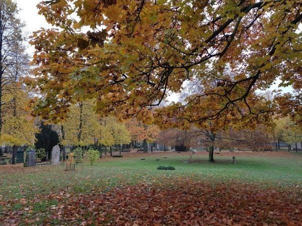 Zaniedbana część Cmentarza Inwalidów w Berlinie, gdzie pochowany jest Heydrich.