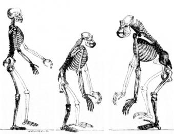 Blisko 150 tysięcy lat temu ziemię zamieszkiwali nie tylko Homo sapiens i neandertalczycy.