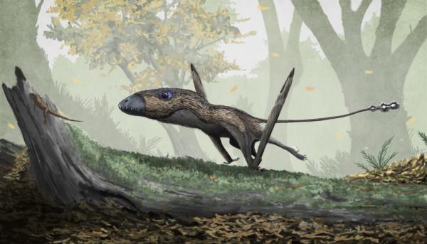 Według Międzynarodowego Towarzystwa Kryptozoologicznego pterozaury były obserwowane w wielu miejscach na całym świecie – m.in. w górach Sierra Madre w Meksyku, w Brazylii i Afryce.