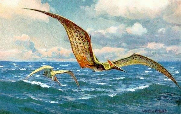 Wyznawcy kryptozoologii od dziesięcioleci poszukują latających gadów. Na razie bez skutku.